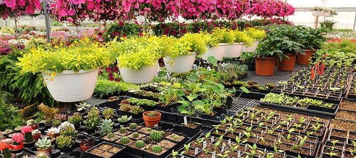 Probiotic Solutions For Plant Nurseries